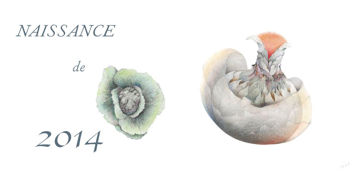 Carte de voeux 2014 de Sabine Van op den Bosch